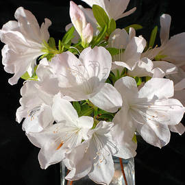Connie Fox - White Azalea Bouquet in Glass Vase