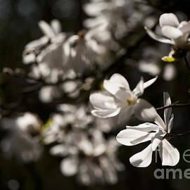 Anne Gilbert - White Beauty