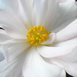 Jennie Marie Schell - White Begonia Floral