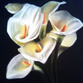 Mojgan Jafari - White Calla Lilies
