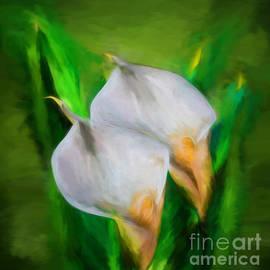 Shirley Mangini - White Calla Lilies