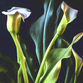 Shirley Mangini - White Calla Lily Bouquet