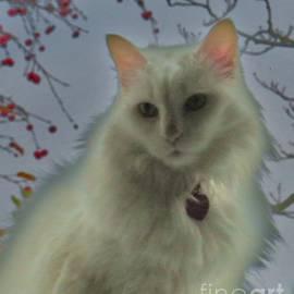 Judy Via-Wolff - White Cat Dreams