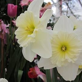 MTBobbins Photography - White Daffodils