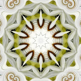 Rose Santuci-Sofranko - White Daisies Kaleidoscope