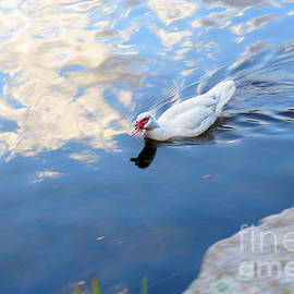 Kaye Menner - White Duck on White Clouds