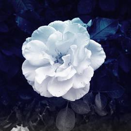 Felix Concepcion - White Flower