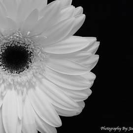 Jeannie Rhode Photography - White Gerbera Daisy Corner