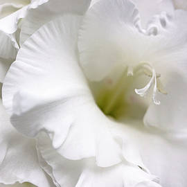 Jennie Marie Schell - White Gladiola Flower Brilliance