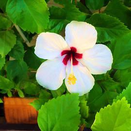 Jo Ann - White Hibiscus