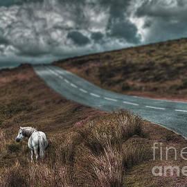 Curtis Radclyffe - White Horse Exmoor