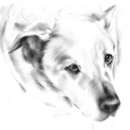 Natasha Denger - White Labrador