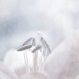 Lali Kacharava - White Lilies