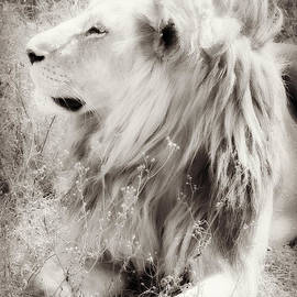 Chris Scroggins - White Lion