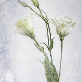 Shirley Mangini - White Lisianthus Flowers