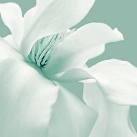 Jennie Marie Schell - White Magnolia Flower Teal