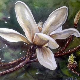 Katerina Kovatcheva - White magnolia