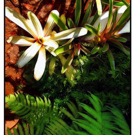 Joan  Minchak - White Maui Flowers