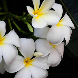Mario Morales Rubi - White May