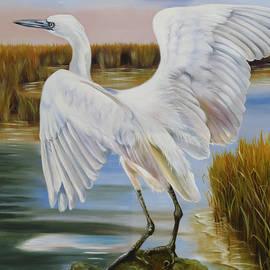 Phyllis Beiser - White Morph Reddish Egret At Creole Gap