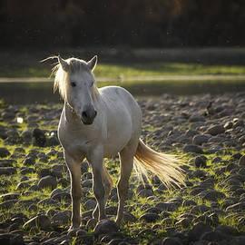 Saija  Lehtonen - White Mustang Riverside