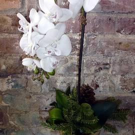 Barbie Corbett-Newmin - White Orchid Old Brick