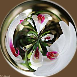 Brenda  Spittle - White Orchid