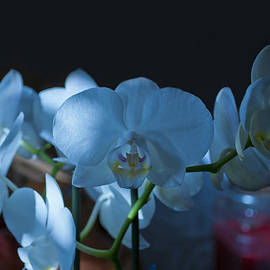 Robert Estes - White Orchids in Partial Shadow
