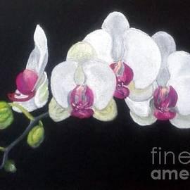Vlatka Jakupec - White Orchids