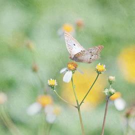 Kim Hojnacki - White Peacock Butterfly