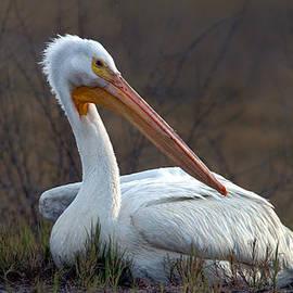 Floyd Hopper - White Pelican