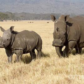 Chris Scroggins - White Rhino Calf