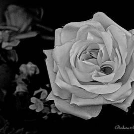 Barbara Zahno - White Rose