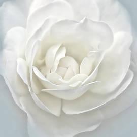 Jennie Marie Schell - White Rose Flower Silver Blue