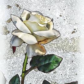 Joan  Minchak - White Rose
