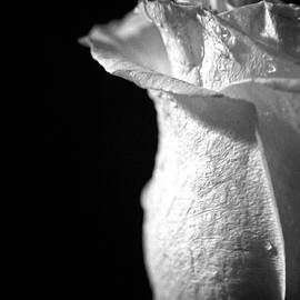 Lali Kacharava - White Rose
