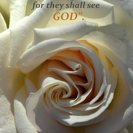 Sandi OReilly - White Rose Macro and Scripture