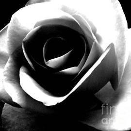 Nina Ficur Feenan - White Rose