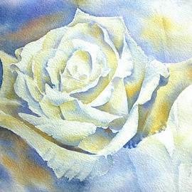 Thomas Habermann - White Rose