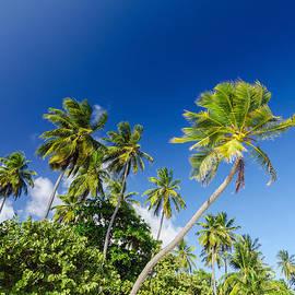Jess Kraft - White Sand and Palm Trees