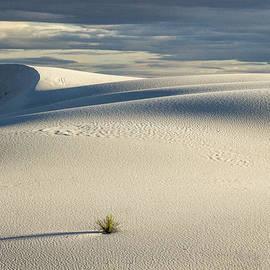 Jean Noren - White Sands Evening