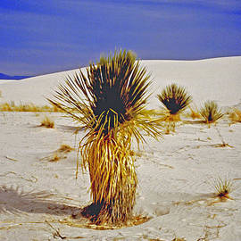 ImagesAsArt Photos And Graphics - White Sands National Monument Cactus