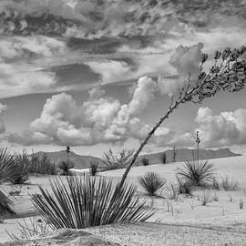Sandra Selle Rodriguez - White Sands New Mexico