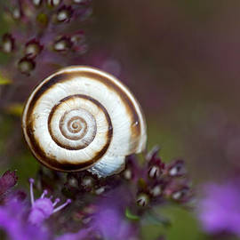 Jaroslaw Blaminsky - White spiral shell