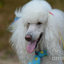 DejaVu Designs - White Standard Poodle
