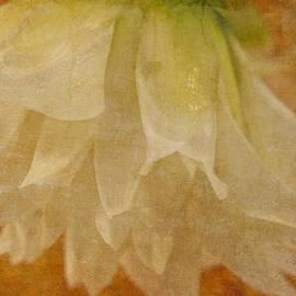 Sandra Foster - White Textured Dahlia Macro