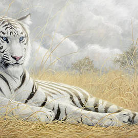 Lucie Bilodeau - White Tiger