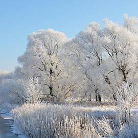 Gynt   - White trees