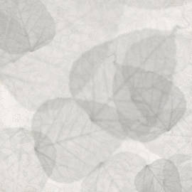 Kandy Hurley - White Wash Leaves