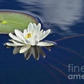 Heiko Koehrer-Wagner - White Water Lily